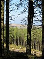 Dartmoor Forest, UK - panoramio (4).jpg