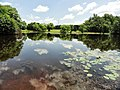 Davidson Mill Pond Park, South Brunswick, New Jersey USA July 15th, 2013 - panoramio (7).jpg