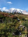 Dead Horse Creek trail. Mt Rainier. (621351d7b76b4a39ac19ab55a3931185).JPG