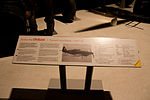 Defiant N1671 information board at RAF Museum London Flickr 2224426752.jpg
