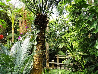 A view inside the Denver Botanic Garden's covered tropical greenhouse.