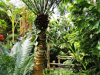 Denver Botanic Gardens - A view inside the Denver Botanic Garden's covered tropical greenhouse.