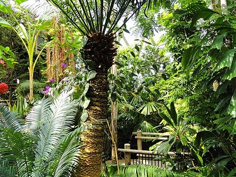 Denver Botanic Gardens - Wikiwand