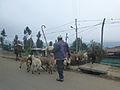 Dessie-Région Amhara (2).jpg