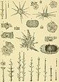 Die Japanischen Seeigel (1887) (20741722869).jpg