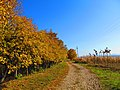 Dioșod 457168, Romania - panoramio (141).jpg