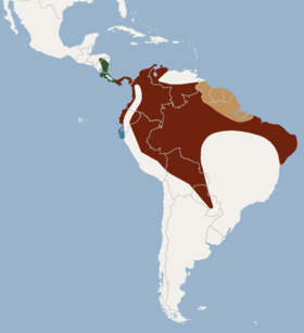 Distribution of Lophostoma silvicolum.png