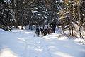 Dogsled rides at Riley Creek Campground (12713420214).jpg