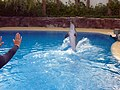 Dolphin Training (7980970144).jpg