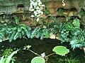 Dovecote Tropical Greenhouse Jerusalem Botanical Gardens IMG 0469.JPG