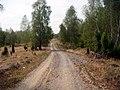 Drum spre Boia Bârzii - panoramio (3).jpg