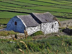 Cottage - A common sight in the west of Ireland - a 19th-century stone cottage - in Carrigmanus, County Cork