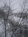 Dzirciema street - panoramio.jpg