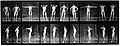 "E. Muybridge ""Animal locomotion"", plate Wellcome L0018598.jpg"