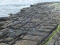 Eaglehawk Neck tessellated pavement 20201115-016.jpg