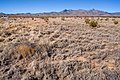 East of Cookes Range - Flickr - aspidoscelis.jpg