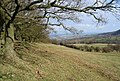 Edge of woods - geograph.org.uk - 714694.jpg