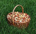 Edible fungi in basket 2020 G7.jpg