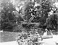 Een reiger op zijn nest, Bestanddeelnr 252-1416.jpg