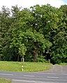 Eiche-wehrheim-002.jpg