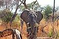 Elephant Feeding.jpg