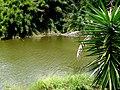 Embalse Dos Bocas de Utuado, Puerto Rico - panoramio (1).jpg