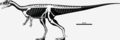 Eoraptor skeletal.png