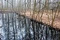Eppendorfer Moor im Wasserspiegel.jpg