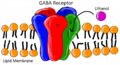 Ethanol and GABA Receptor.png
