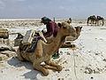 Ethiopie-Exploitation du sel au lac Karoum (28).jpg