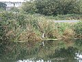 Exeter Canal beside the cycle path - geograph.org.uk - 1556954.jpg