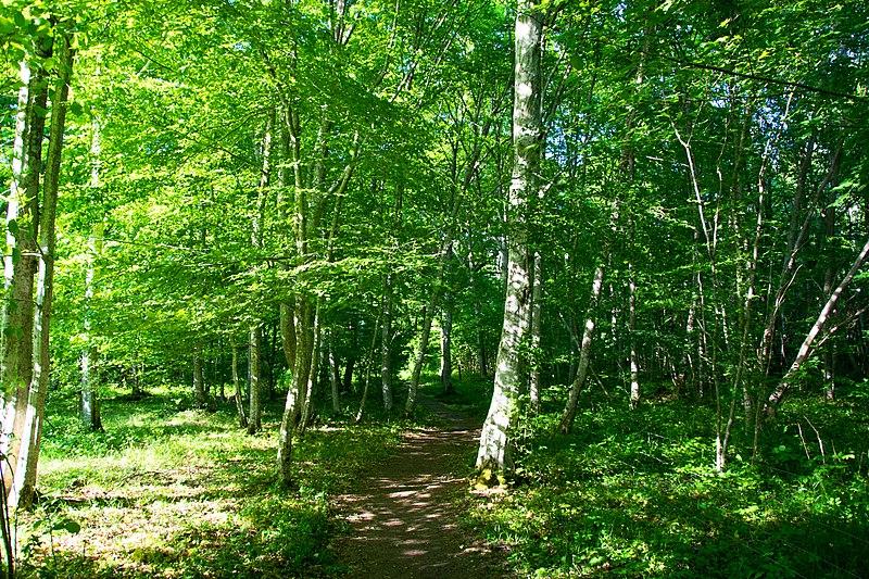 800px-FOREST_PATH_-_HALLTORPS_HAGE_-_SARAHNARA.jpg