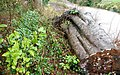 Fallen tree, Glynn - geograph.org.uk - 678470.jpg