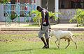 Farmer with a goat Gambia.jpg