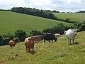 Farmland, Radnage-Chinnor - geograph.org.uk - 884892.jpg