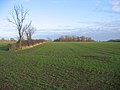Farmland, Ufford, Peterborough - geograph.org.uk - 94752.jpg