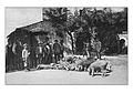 Ferentino storica Largo Ambrogiano-fiera dei maiali.jpg