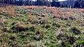 Field Blackwood Farm Park Hillsborough NC 105929 (36094647436).jpg