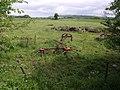 Field near Oath - geograph.org.uk - 438523.jpg