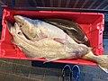 Fiskebryggen, Mathallen, Fishmarket, Bergen, Norway 2018-03-16. Cod fish, in plastic box, for sale at Fjellskål sea food store.jpg