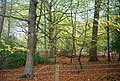 Five Hundred Acre Wood - geograph.org.uk - 1585004.jpg