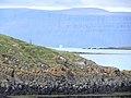 Flatey, Breiðafjörður - panoramio (22).jpg