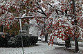 Flickr - Nicholas T - October Snow (5).jpg