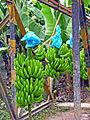 Flickr - archer10 (Dennis) - Guatemala-0677.jpg