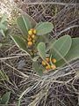 Flores do Cerrado 06.jpg