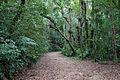 Floresta da Tijuca 52.jpg