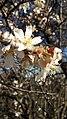 Flower10170.jpg