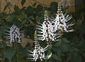 Flower 1 (15383775349).jpg