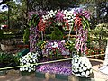 Flower show-11-cubbon park-bangalore-India.jpg