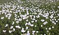 Flowers, green 44.jpg